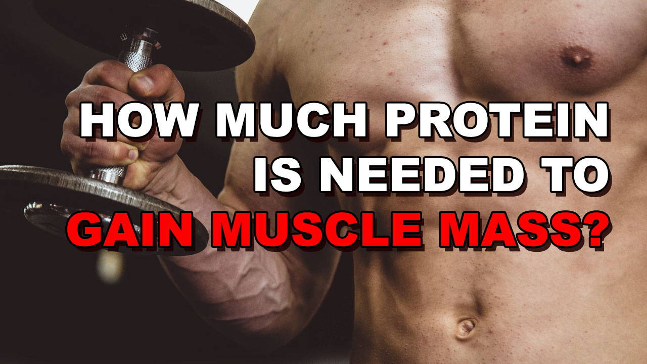 How Much Protein Is Needed To Gain Muscle?