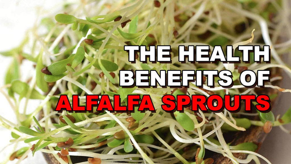 The 4 Main Health Benefits of Alfalfa Sprouts