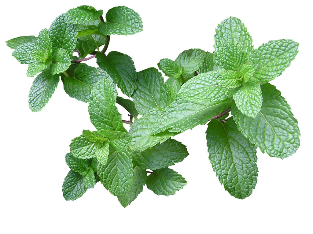 Skincare Benefits of Herbs and Essential Oils