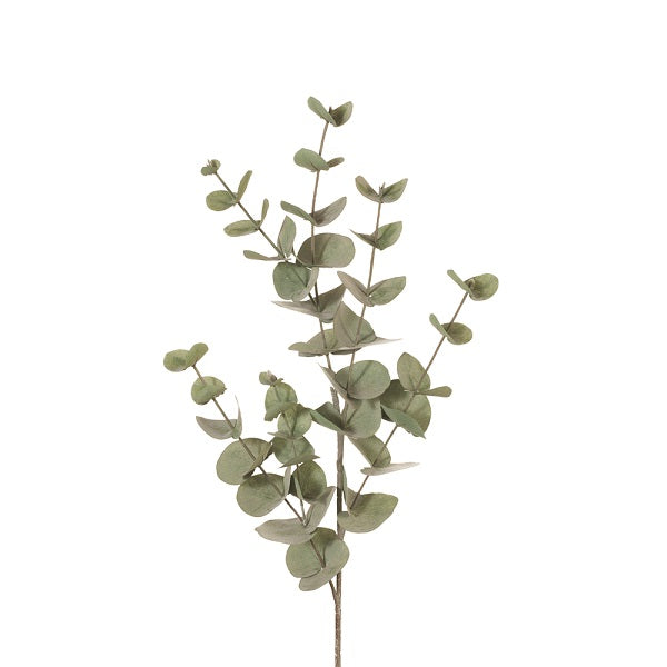Greenery | Eucalyptus Silver Dollar Forest Green 86cmL