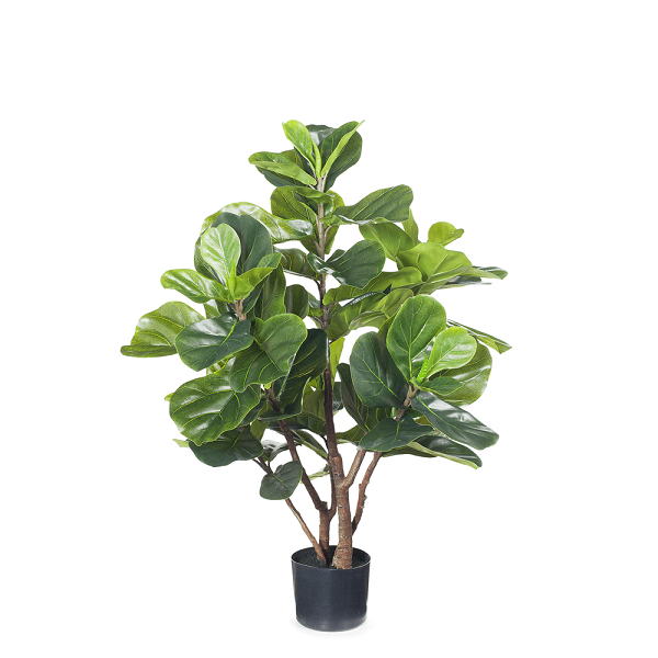 Greenery | Fiddle Leaf Plant Green 93cmH