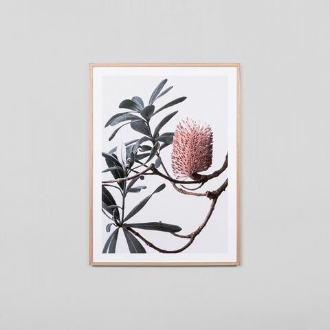 Banksia Portrait 1 Framed | Art