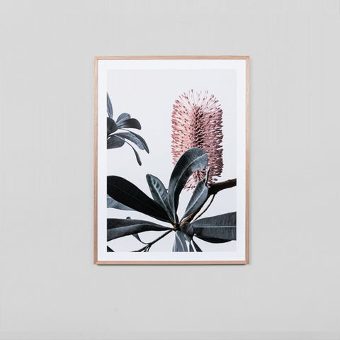 Banksia Portrait 2 Framed | Art