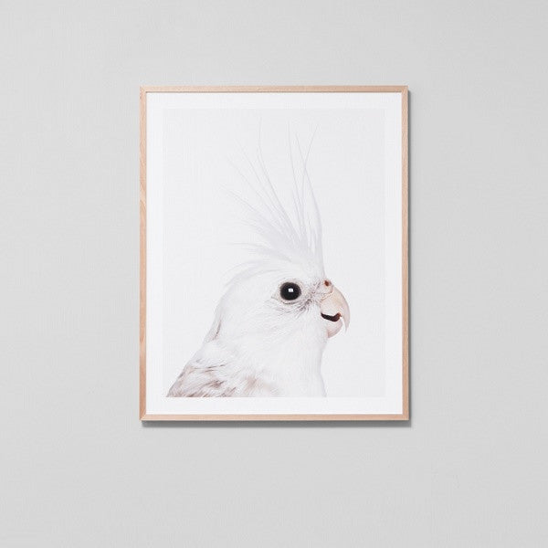 Cockatiel Framed | Art