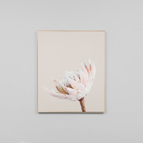 Middle of Nowhere | King Protea Portrait 1 Framed Canvas