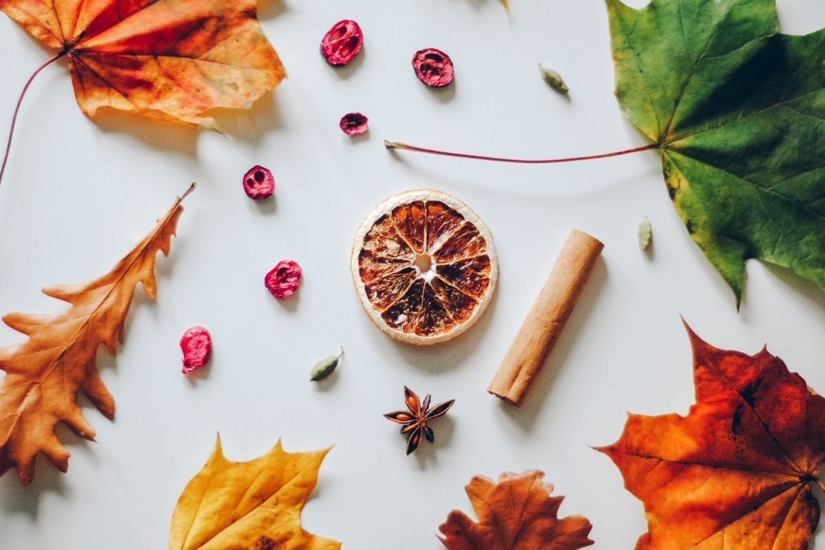 cinnamon stick and dried orange slice with fall leaves
