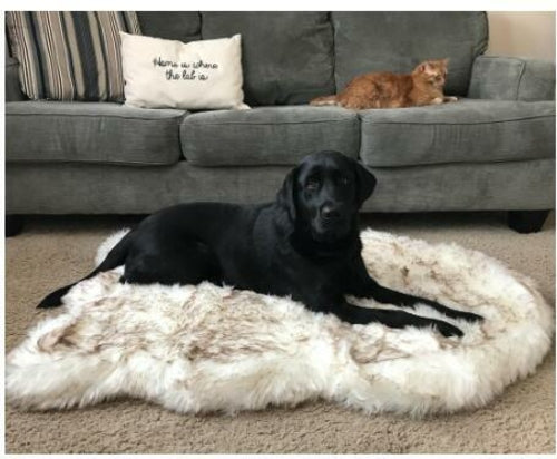 Doggo Fluffy Bed