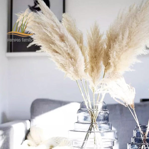 Large Size Pampas Grass