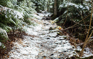 picture of snowy trail through a forest