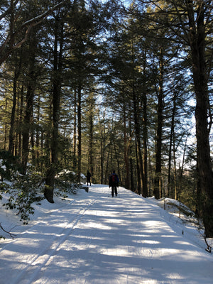 cross country skiing through a forest in Minnewaska State Park