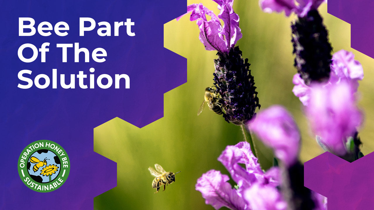 Operation Honey Bee. Bee Part Of The Solution.