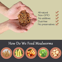 Euchirus 20LB Non-GMO Dried Mealworms for Wild Bird Chicken Fish,High-Protein,Large Meal Worms.