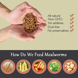 Euchirus 22LB Non-GMO Dried Mealworms for Wild Bird Chicken Fish,High-Protein,Large Meal Worms.