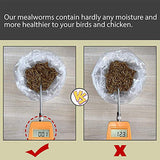 Euchirus 5LB Non-GMO Dried Mealworms for Wild Bird Chicken Fish,High-Protein,Large Meal Worms.