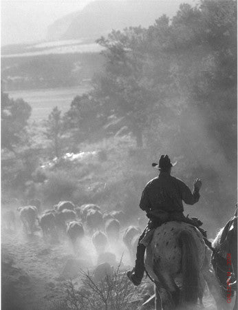 Cattle Drive #32 by Allen Birnbach