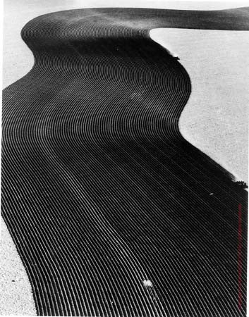 Crop Protective Pattern, Walsh, Colorado by Margaret Bourke-White