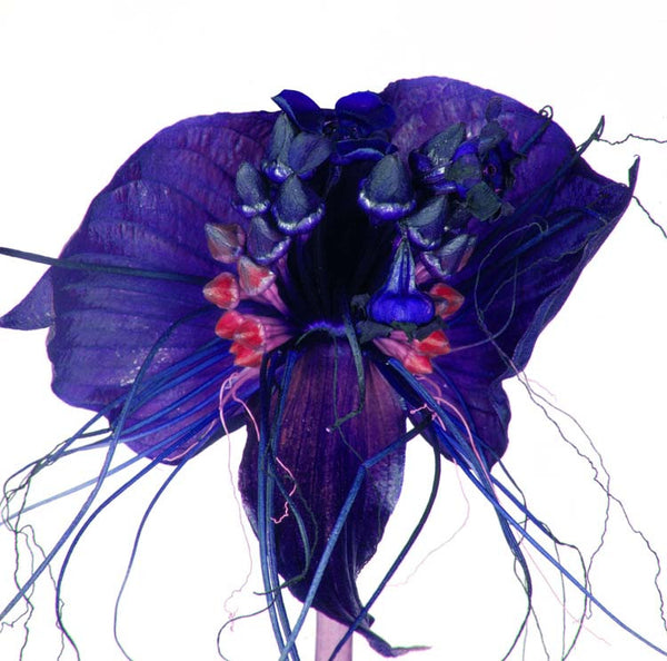 Orchid Rocca 002 by Howard Schatz