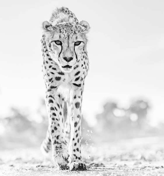 Hot Legs Nambia 2019 by David Yarrow