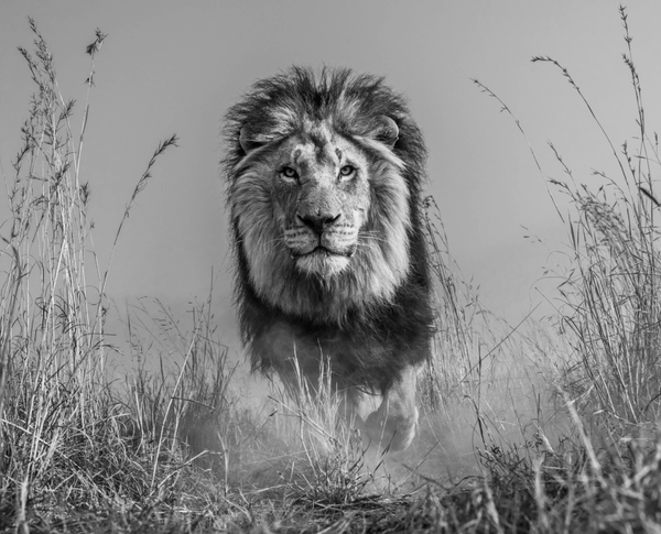 King and I by David Yarrow