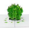 Pop up marijuana plant inside 420 greeting card for potheads.