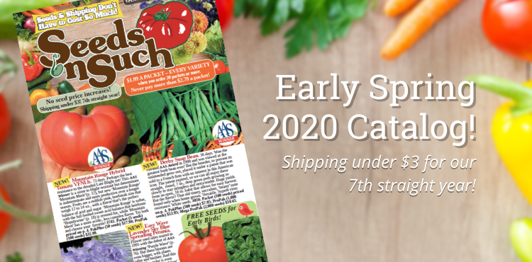 Introducing our Early Spring 2020 Catalog