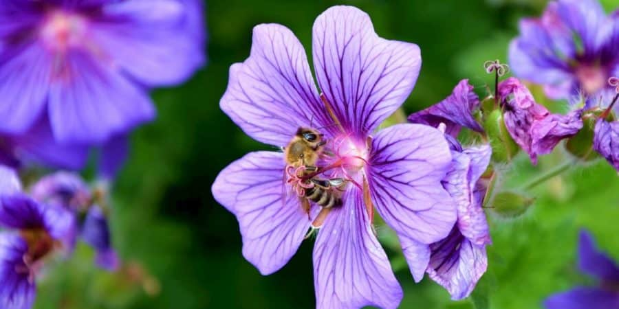 Xerces Society's Recommendations For Establishing Pollinator Habitats