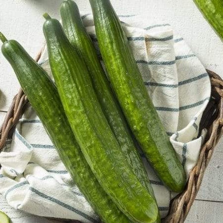 'English Sweet Long Slim' Cucumber Is Must-Grow For 2019 Home Gardeners!