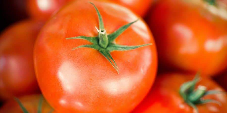 How To Win Those Bragging Rights for the Earliest Ripe Tomato