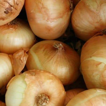 Onion Plants Start Shipping January 28th!