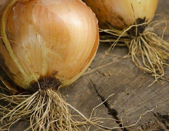 May 11th Last Day to Buy Onion Plants