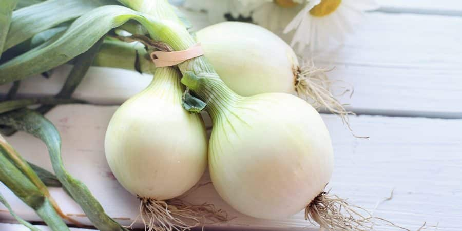 Our Shift From Pungent To Sweet Onions Likely Cost Us Precious Phytonutrients