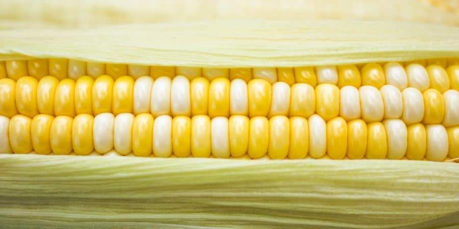 Sustainable Farmer Joel Salatin Cites Study Of Chemical Use On Sweet Corn