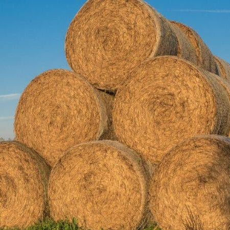 Can't Find Straw Bales; Make Your Own From Compostable Leftovers