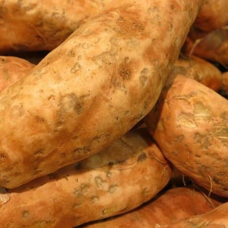 Order Sweet Potato Plants Now For Shipment Beginning April 15