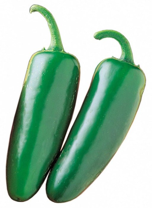 Mucho Nacho Jalapeño Hybrid Hot Pepper Seeds