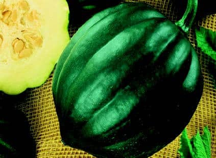 Acorn or Table Queen Winter Squash Seeds