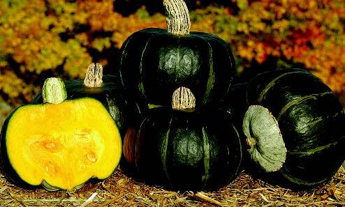 Bulk: Bonbon Buttercup Hybrid Winter Squash Seeds