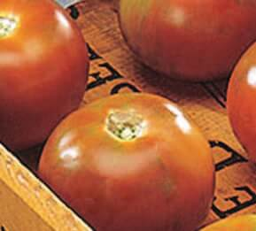 Bulk: Burpee's Long-Keeper Tomato Seeds