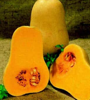 Early Butternut Hybrid Winter Squash Seeds