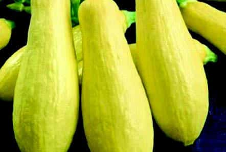 Early Prolific Straightneck Summer Squash Seeds