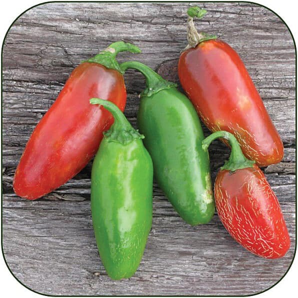 Early Jalapeno Hot Pepper Seeds
