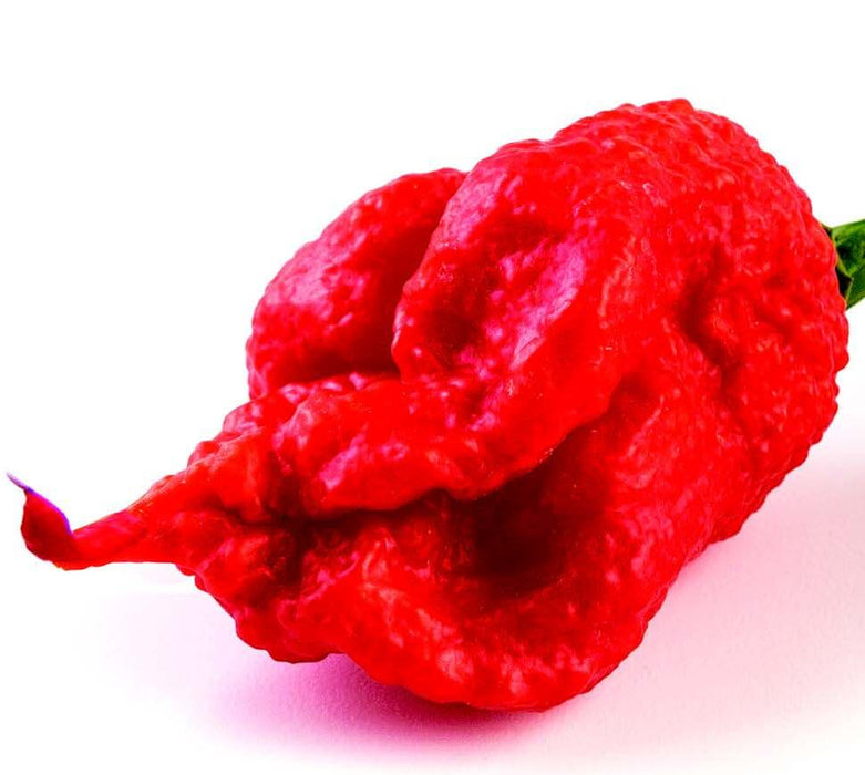 Carolina Reaper Super-Hot Pepper