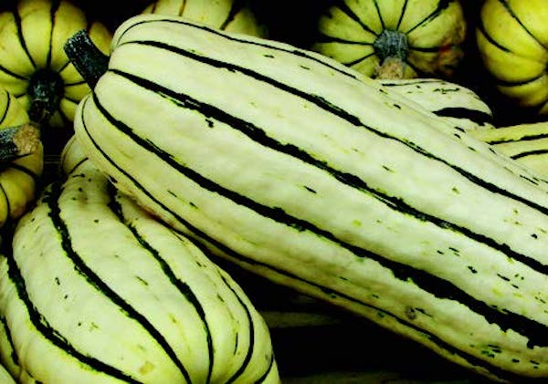 Delicata or Sweet Potato Winter Squash