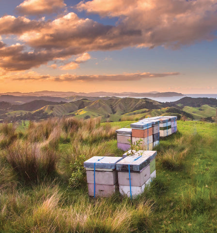 Bee Hives in New Zealand Landscape