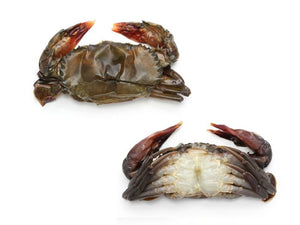 Soft Shell Crabs (12)