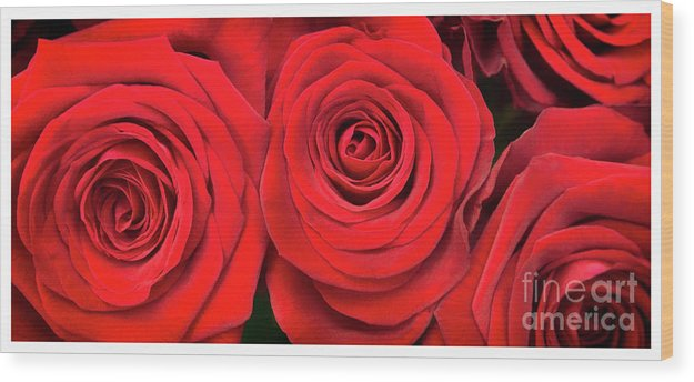 Red Roses - Grand Prix - Wood Print