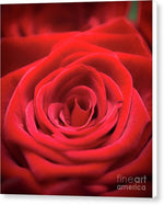 Load image into Gallery viewer, Red Roses - Grand Prix - Canvas Print