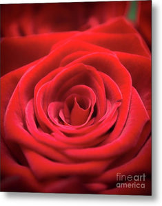 Red Roses - Grand Prix - Metal Print