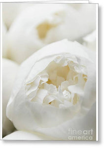Close up of Peonies - Greeting Card
