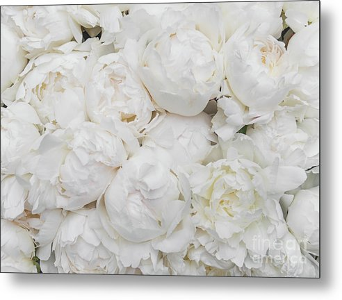 Full Peonies - Metal Print